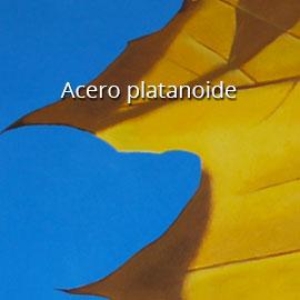 Acero2_P